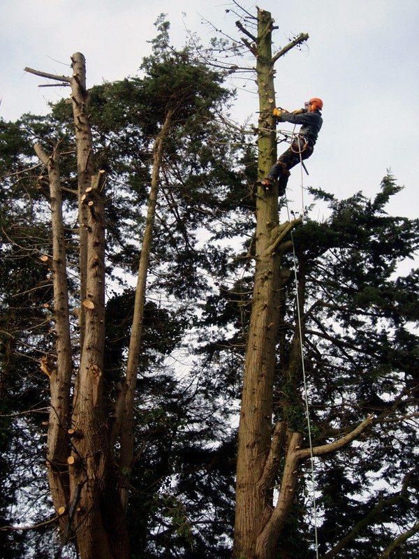 Tree Work and Hedge Cutting DVGardens Exmouth Devon